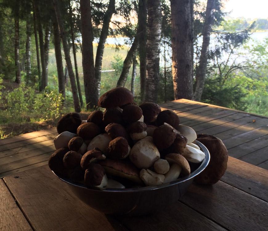 Съедобные грибы Селигера – отдых на базе Яр